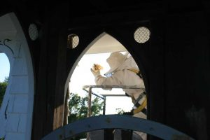 Encore-Sustainable-Design-Asbury-Methodist-Bee-Removal